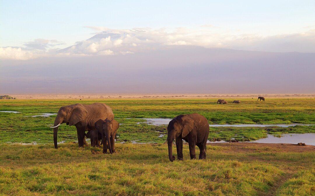 https://pixabay.com/photos/elephants-family-africa-park-4275741/